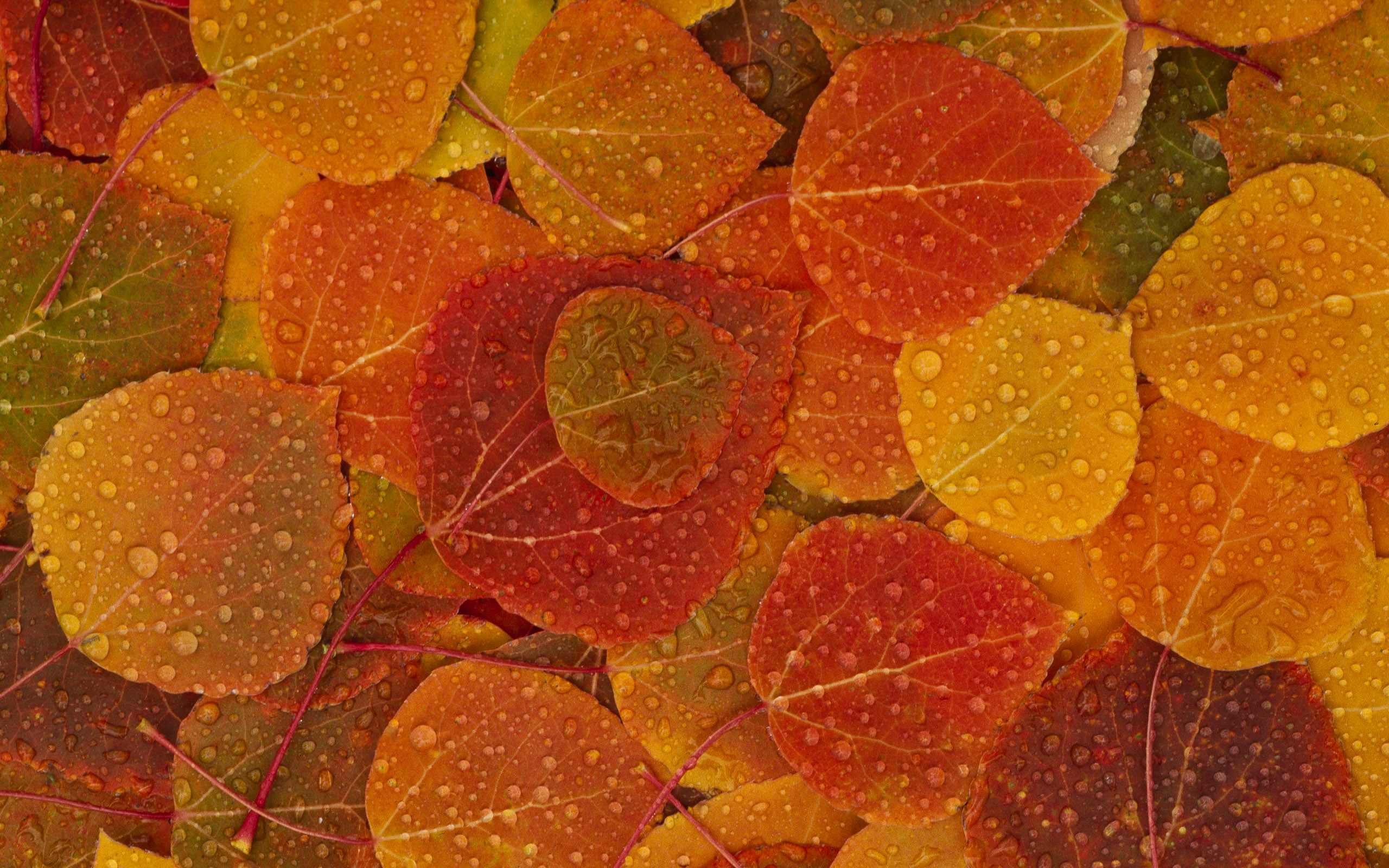 fall leaves hd wallpaper 2560x1600 my cleaning lady